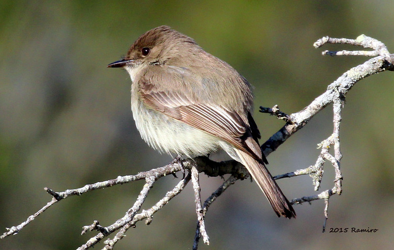 Bird 3-27-15 214.jpg