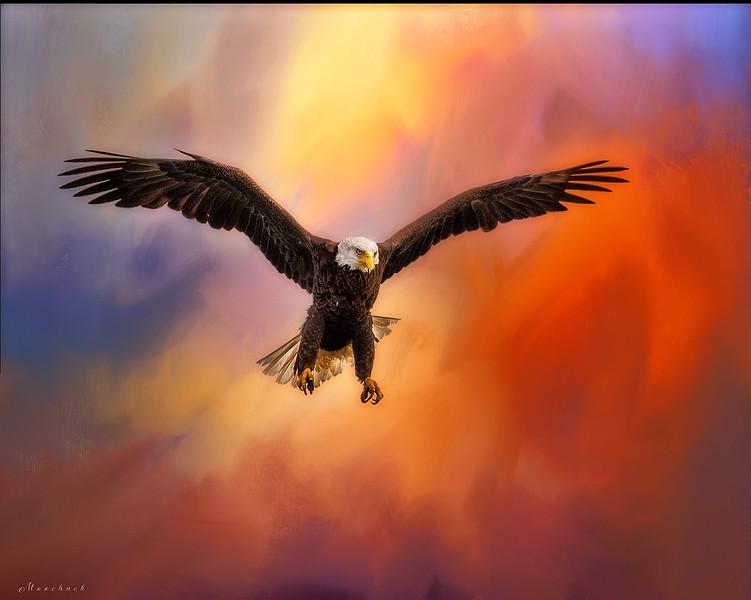 Eagle5_DSC0093-copy.jpg