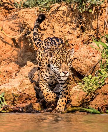 The Pantanal, Brazil 2017