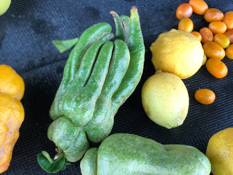 A collection of Hawaiian citrus