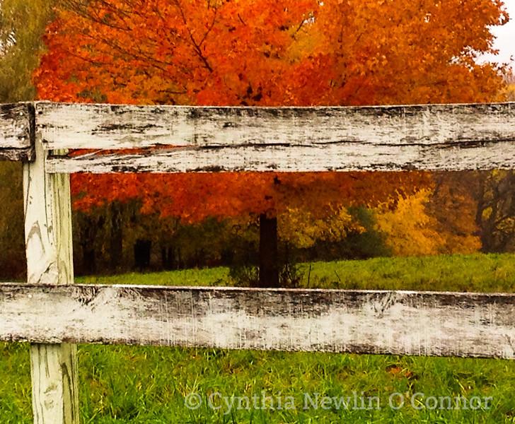 Fall Fence (digital 2014).jpg