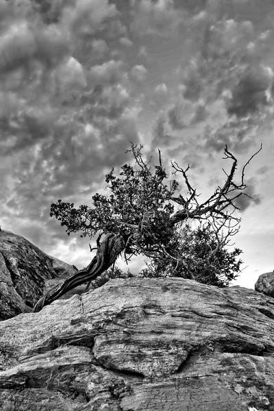 Arch Canyon--2.jpg