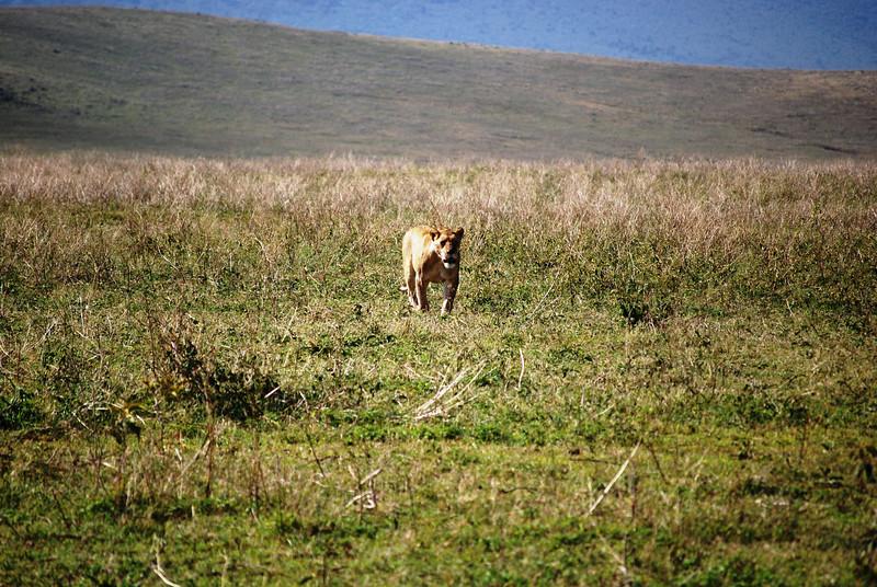 Ngorongoro (60).JPG