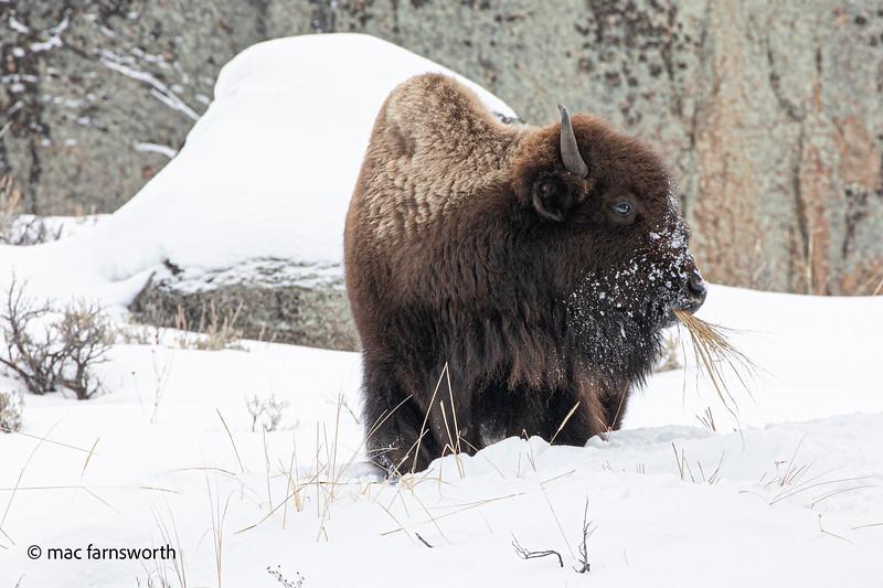 Yellowstone007January 26, 2020.jpg