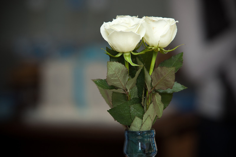 White roses on the dining room table