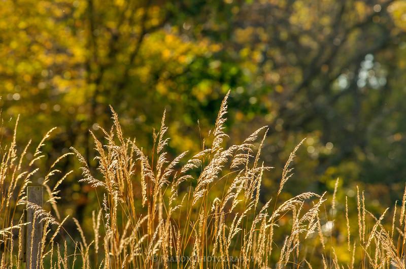 Autumn Grassland and Foliage