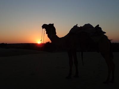 Jaisalmer and Jodhpur '16