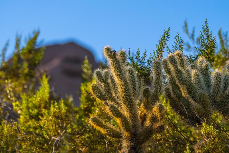Desert Art  22