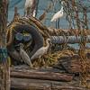 37  Cochin Egrets