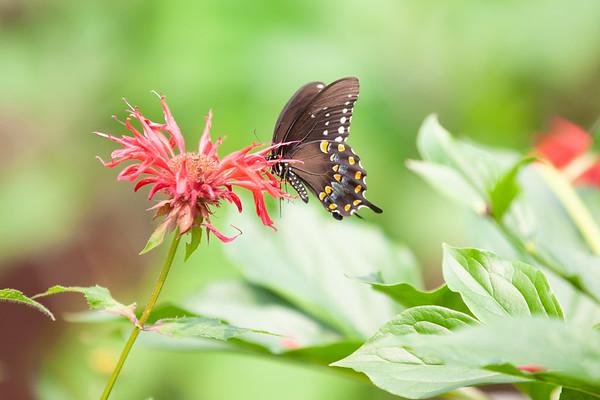Butterflies of 2021