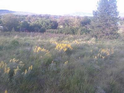 Wildflower Walk, Gangloff Park, 5.21.13