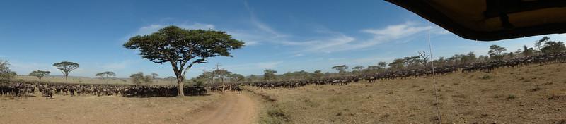 East Africa Safari 336.jpg