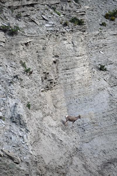 Yellowstone (70).jpg