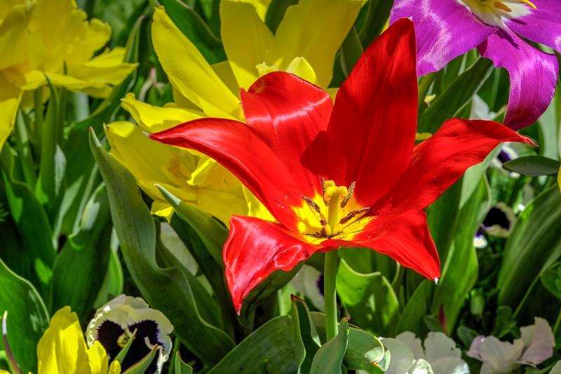Garden 1, 069.jpg