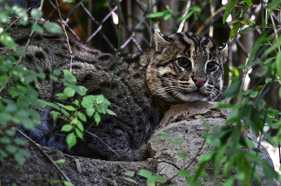 San Diego Zoo - Oct 29, 2011