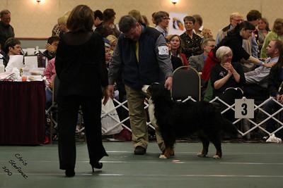 Sweeps 7-9yr Veteran Bitch BMDCA 2010