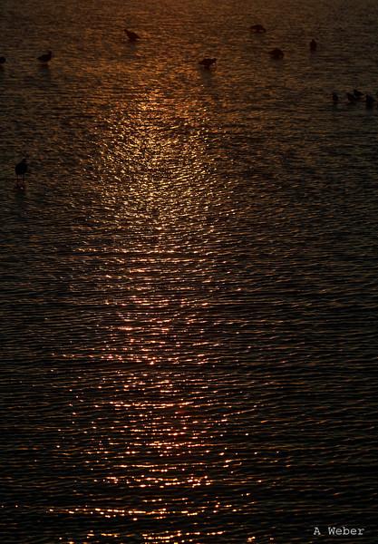 2009_01_13
