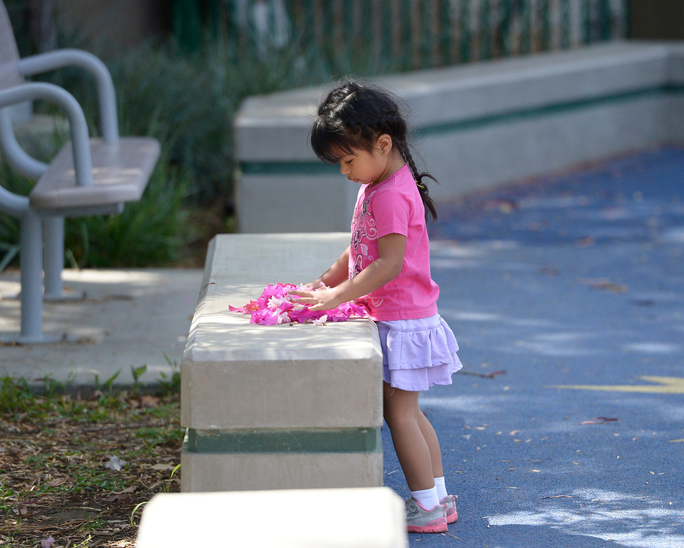 . Samantha Valdivia, 3, plays with petals from a flowering tree at Fulton Ave. Park, located on Fulton Avenue north of Vanowen. A new Park Score survey done by the Trust For Public Land that ranks LA 45th out of 60 cities in the country in terms of parks, accessibility, maintenance and acreage. North Hollywood. CA. 5/29/2014(Photo by John McCoy / Los Angeles Daily News)