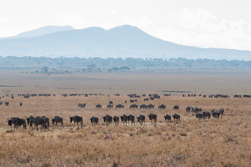 Africa - 102016 - 7531.jpg