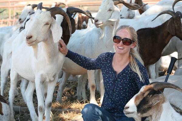 Beth's Goats