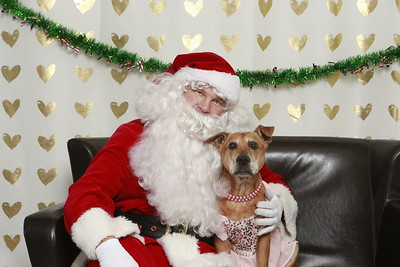 Calgary Humane Society Santa Photos 2018