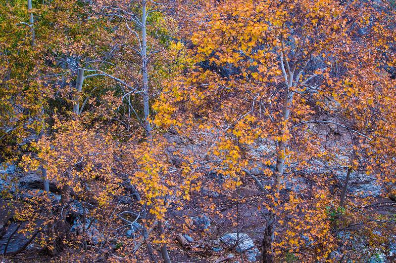 Sierra_Pelona_Mountains_Fall_Color_Southern_California_MG_7697.jpg