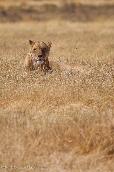 Ngorongoro-33.jpg