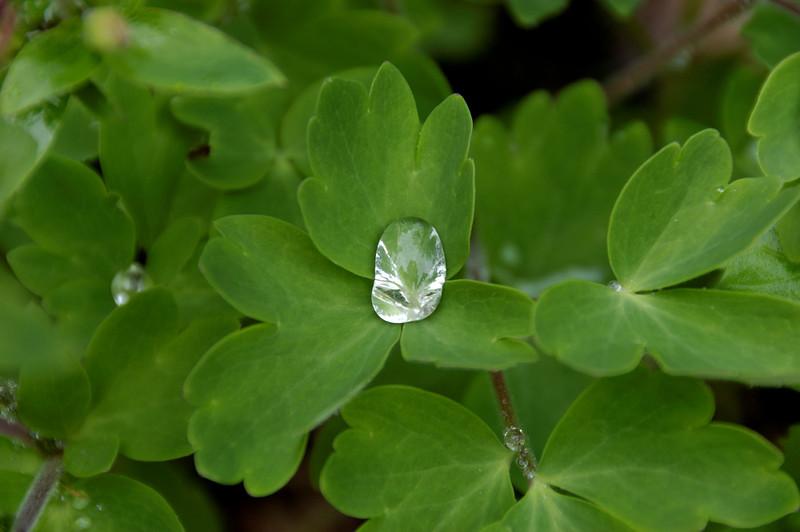 Geranium Annual (1).jpg