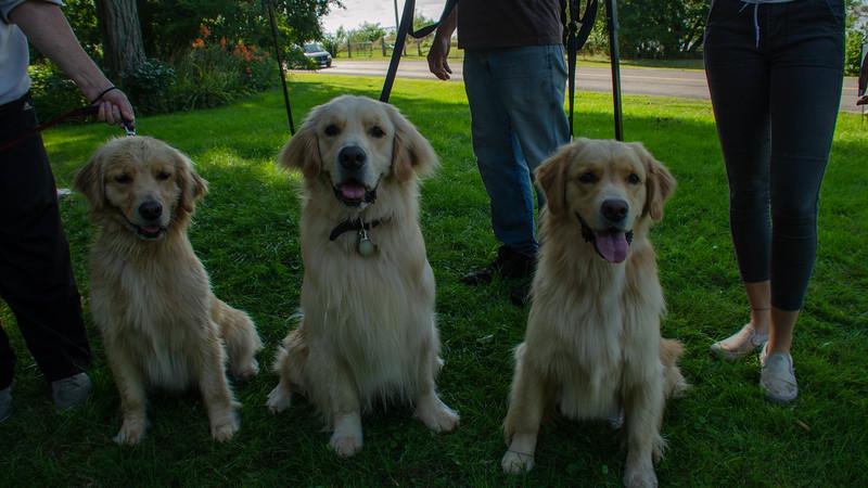 PuppyParty18-582.jpg