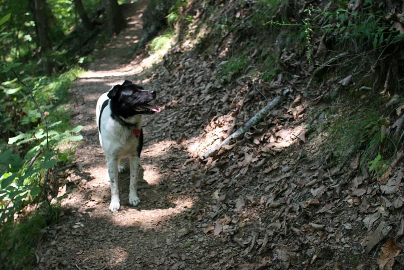 Bessie on the App Trail