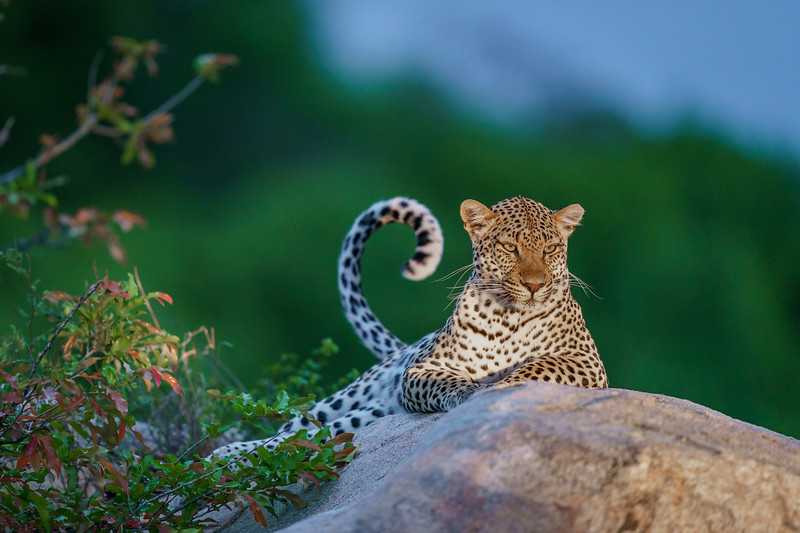 LeopardHills-20191029-2434.jpg