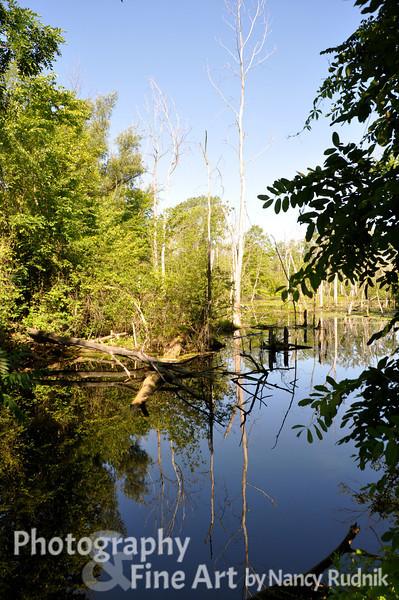 Holland Ponds