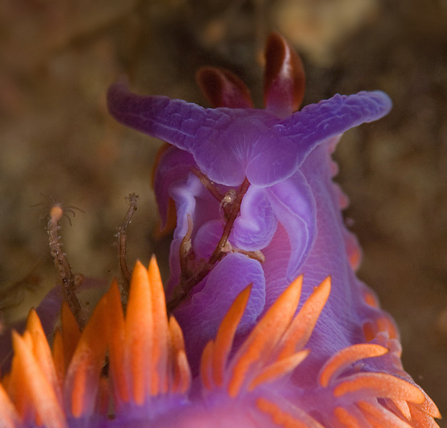 scott gietler