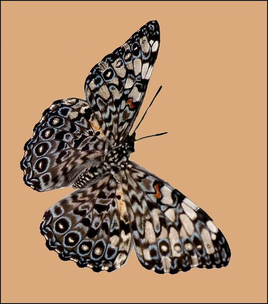 Butterfly 15.jpg
