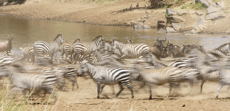 Kenya 2015-04608.jpg