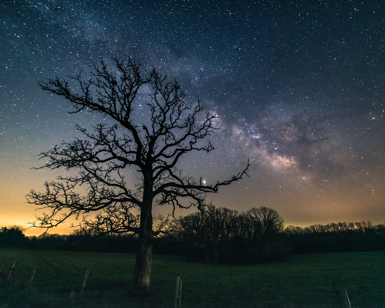 Branches into the stars #2