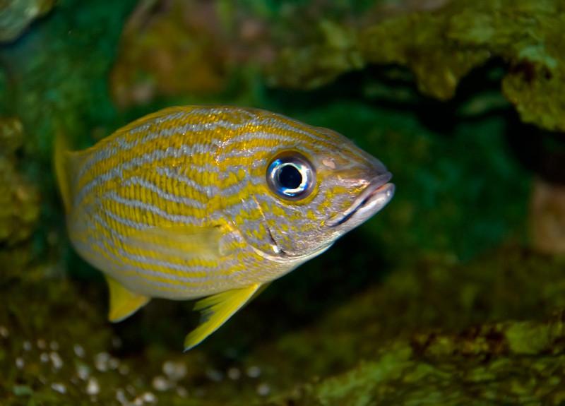 fish3_0173.jpg