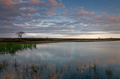 Springbrook Prairie Nature Preserve