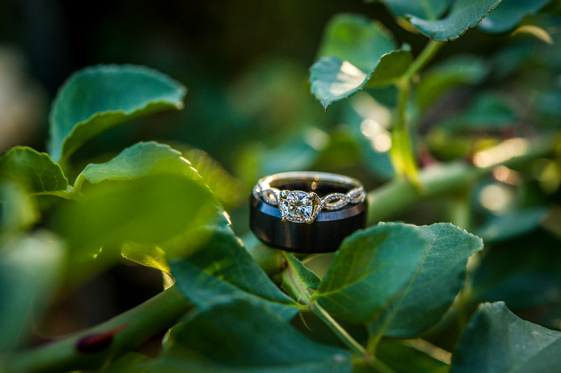 Corinne Howlett Wedding Photo-593.jpg