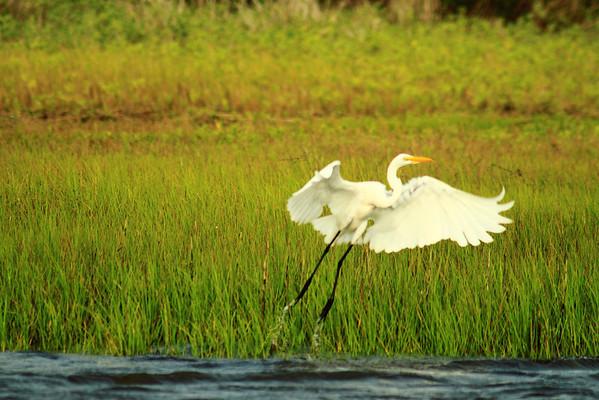Birds at Carolina Beach