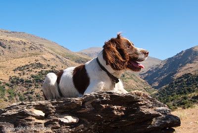 Chester (our dog) on tour
