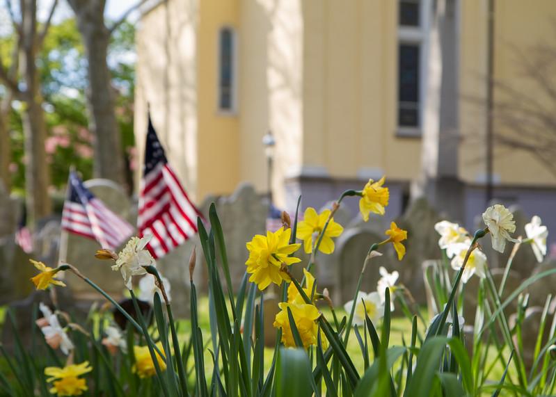 Flag-flowers-9564.jpg