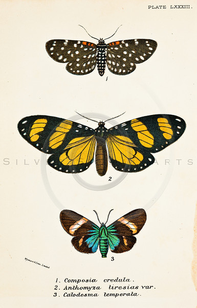 All Vintage Butterflies