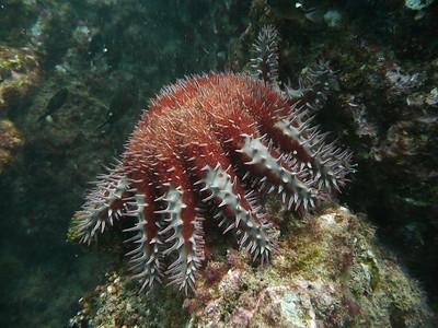 Costa Rica-Ballena Marine
