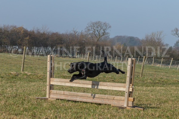 GUNDOG TRAINING - NOVICE FEB 2019