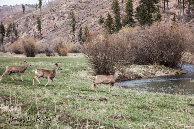 Cow Creek, NM