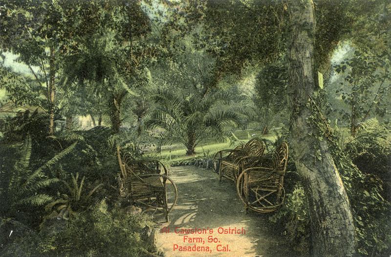 Ostrich Farm Benches