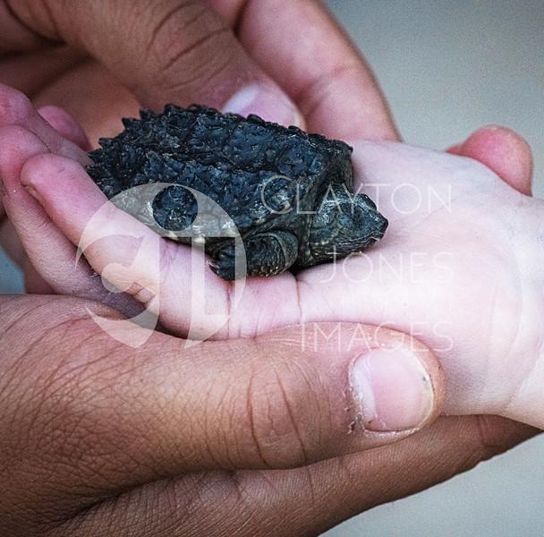 turtles_5.31.2020_-29.jpg