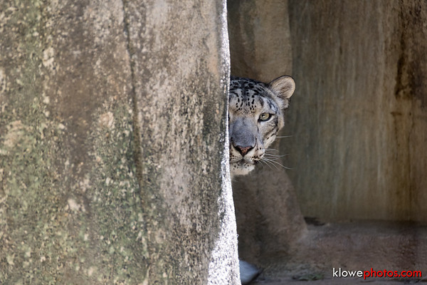 2017-06-07 Memphis Zoo