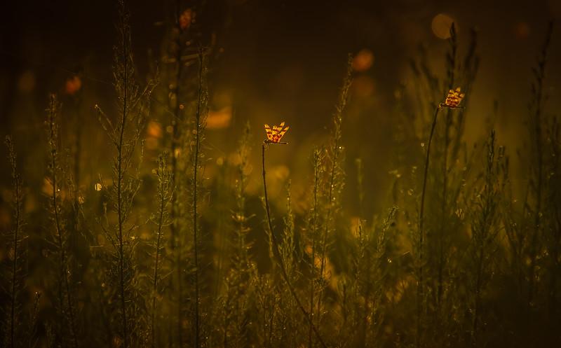 The Magic of Light-078.jpg